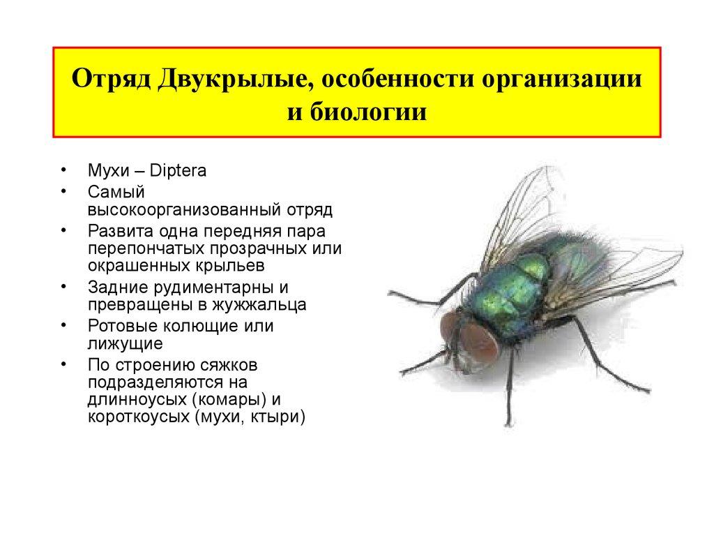 Глава xi. полезные лесные насекомые