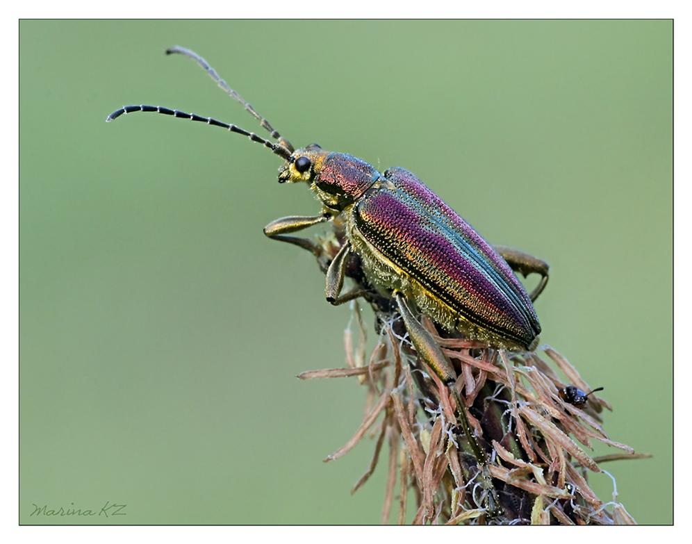 Наездник насекомое. описание, особенности, виды, образ жизни и среда обитания наездника