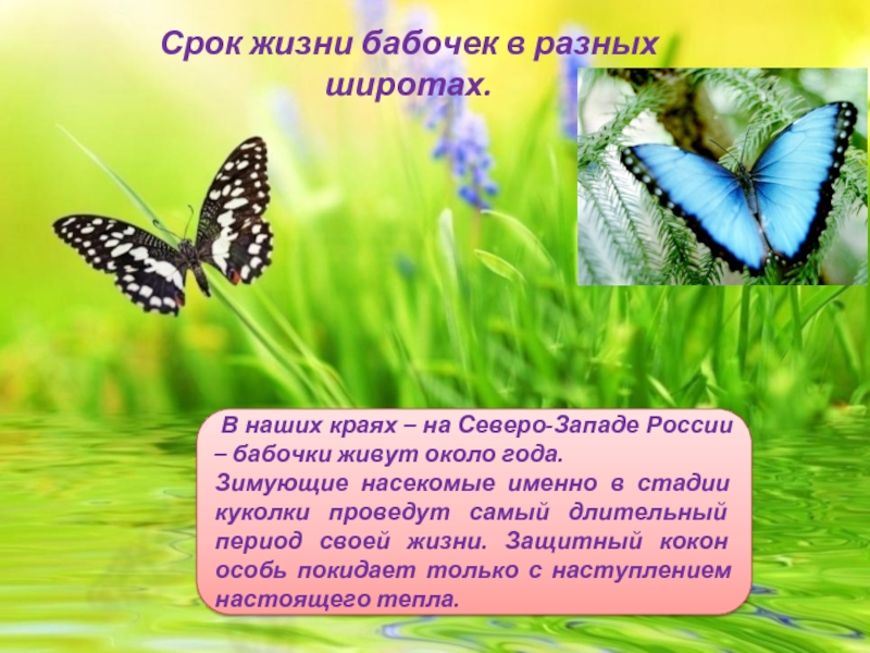 Бабочки по фен-шуй – символ семейного благополучия