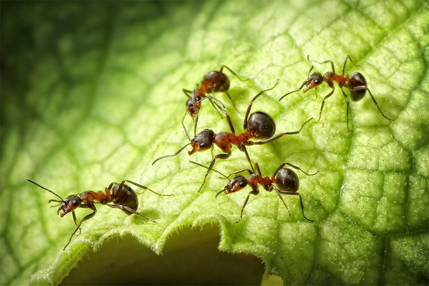 Кто ест муравьев — nasekomie