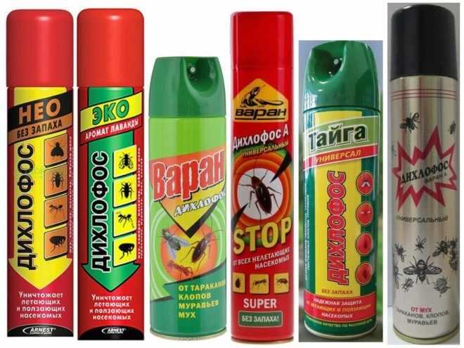 Дихлофос от клопов с запахом и без - какой лучше помогает вывести паразитов