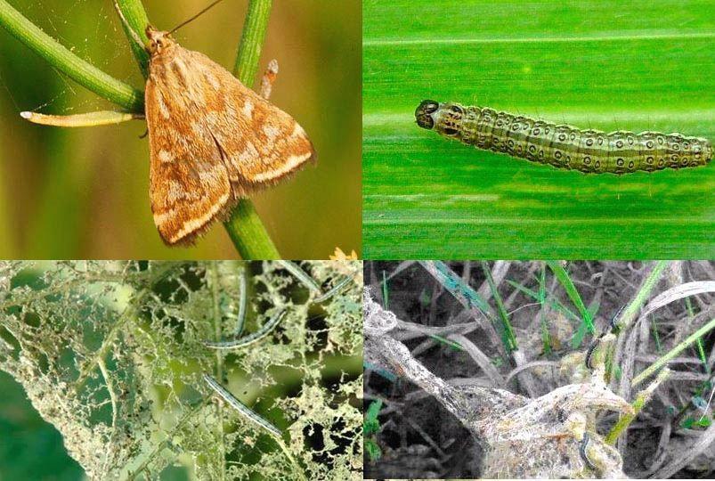 Порхающие бабочки, грызущие гусеницы