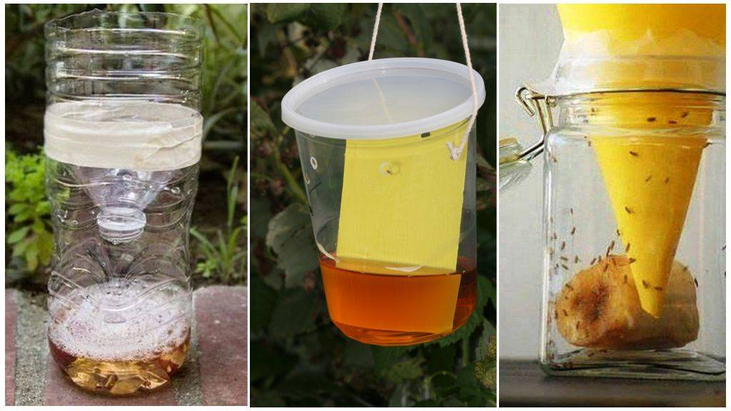 Как сделать ловушку для мух в домашних условиях: пластиковая бутылка, металлическая банка и липкая бумага