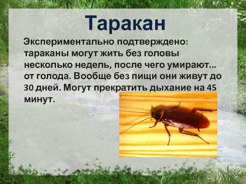 Как тараканы пьют воду сколько проживут без нее