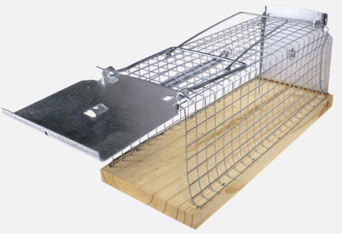 10 лучших ловушек для крыс и аналоги - капкан, живоловка, электроловушка