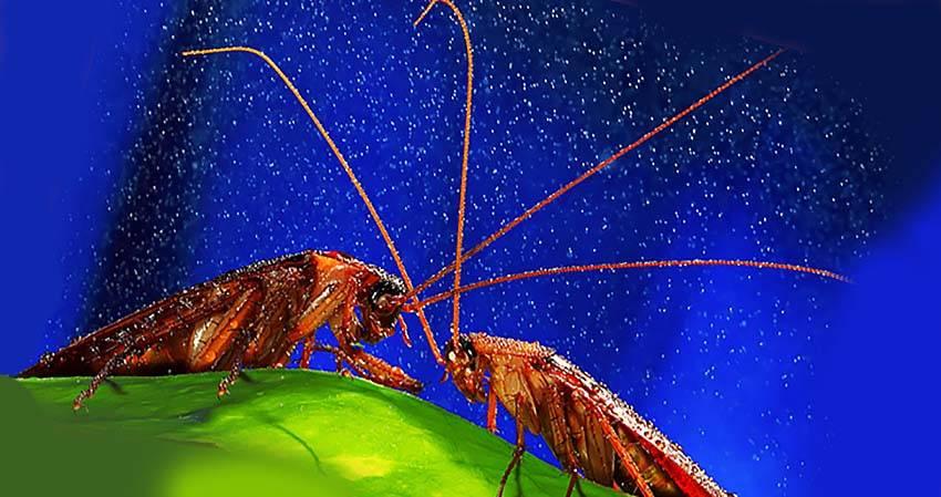 Сколько живут тараканы домашние без еды, воды и головы