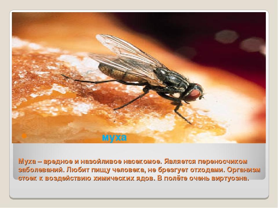 Какая польза от мух