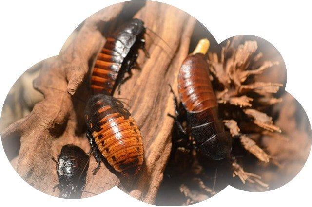 Убивать чёрных тараканов