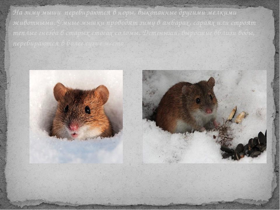 Где и как зимуют осы, живущие под крышей дома, погибают ли зимой?