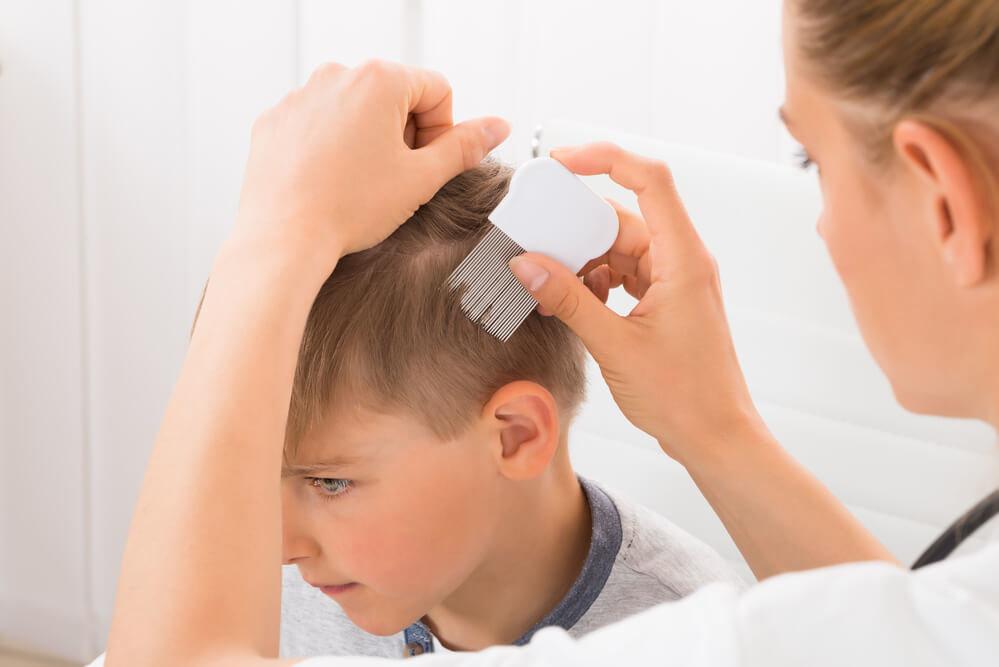 Откуда берутся вши у детей и почему постоянно появляются – от чего это зависит: причины возникновения педикулеза у ребенка