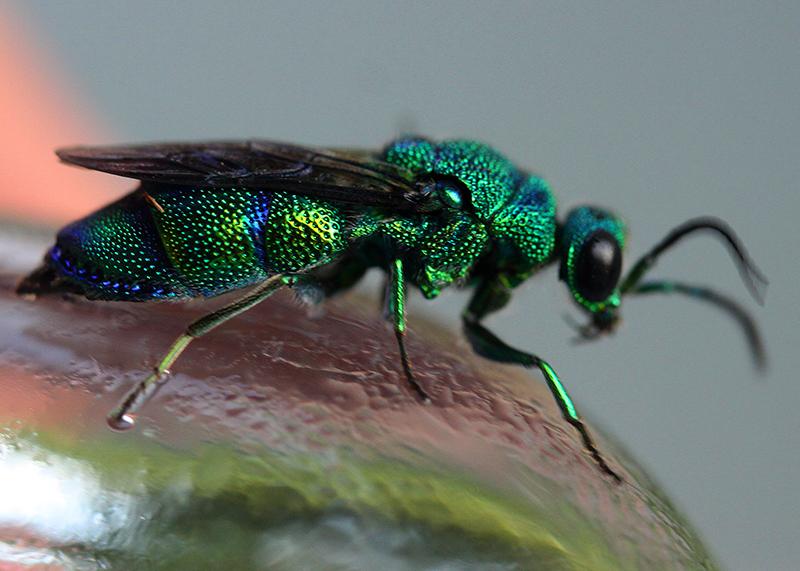 Особенности жизни насекомых