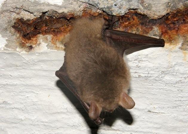 Эффективные способы по изгнанию летучих мышей на даче