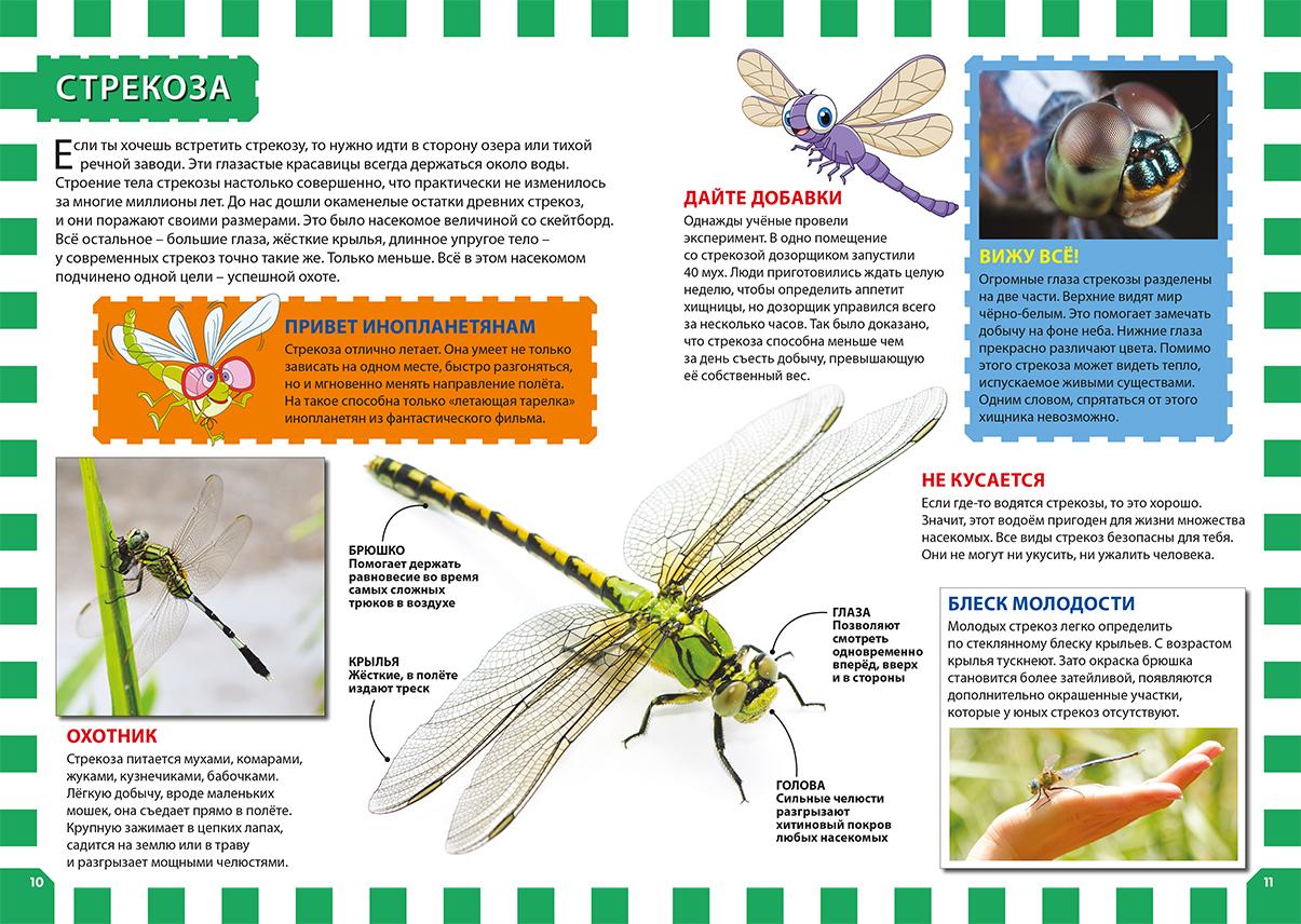 Стрекоза решетчатая — крупный представитель рода ортетрум