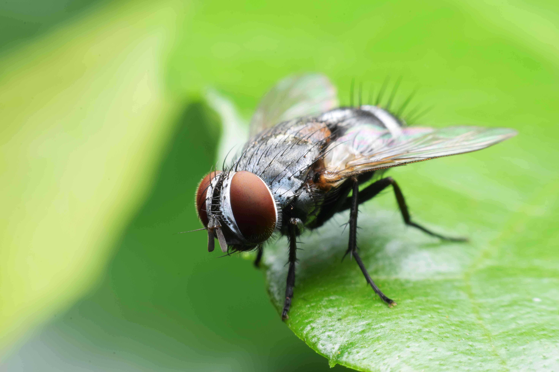 Чем питаются мухи в домашних условиях и в природе
