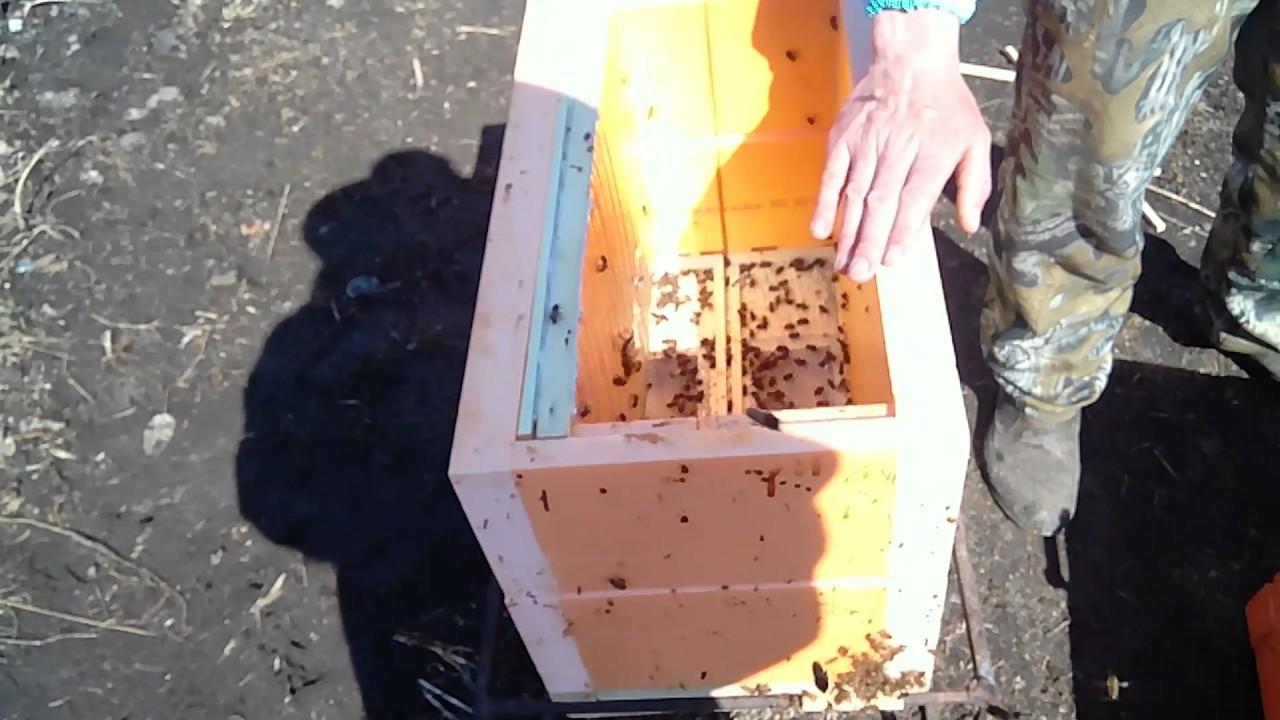Весенняя обработка пчел от клещей: советы и видео весенняя обработка пчел от клещей: советы и видео