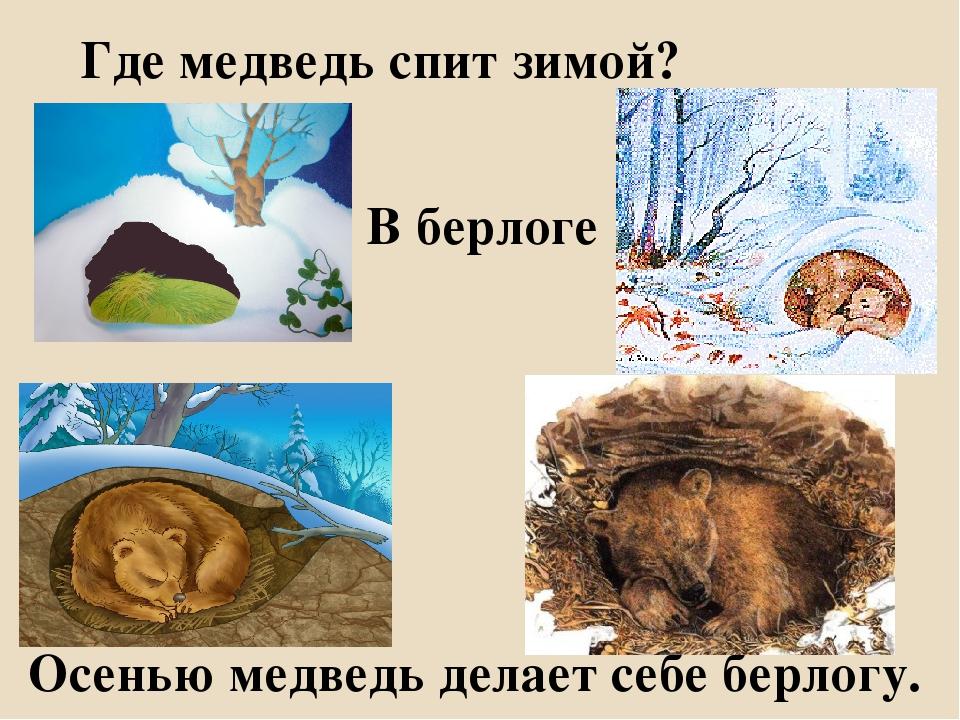 Как зимует крот и впадает ли он в спячку в холодное время года?