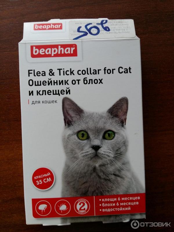 Ошейник от блох для кошек: как действует, сколько носить, какой выбрать