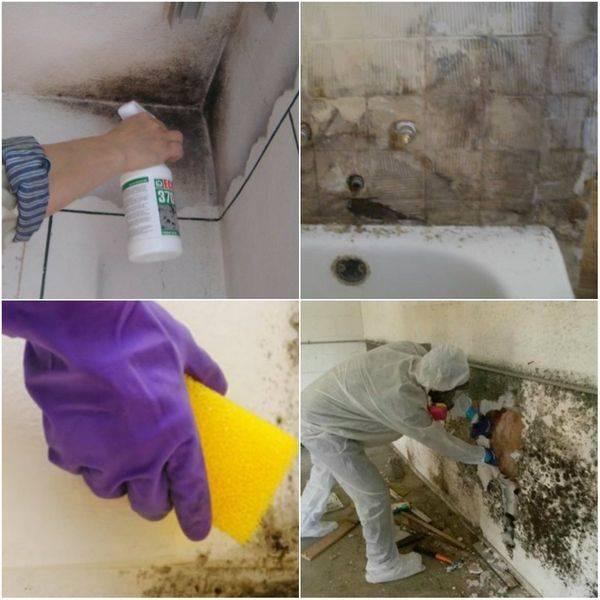 Как избавиться от плесени на стенах в квартире своими руками