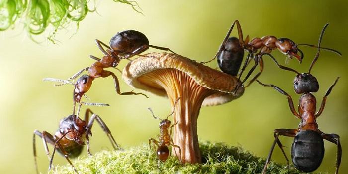 К чему снятся муравьи: замужней женщине, незамужней девушке, мужчине, в доме, в кровати