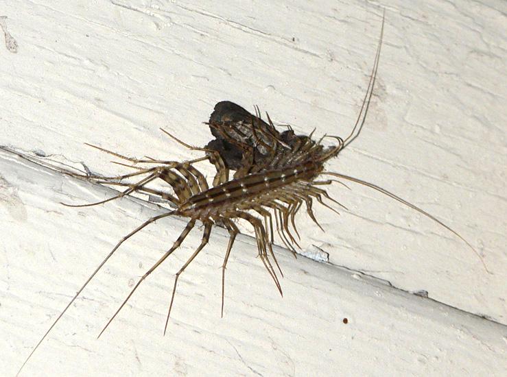Мухоловка насекомое