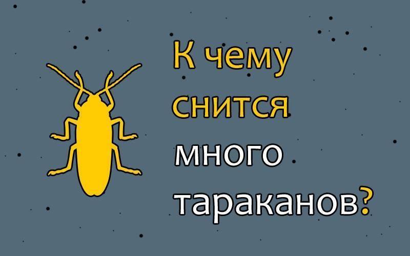 К чему снятся тараканы мужчине и женщине: живые, рыжие, чёрные и большие тараканы во сне