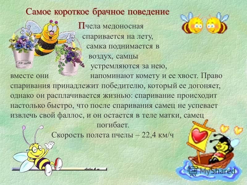Интересные факты о пчелах. о о дним из немногих насекомых, которое сотрудничает с человеком, является пчела. вот несколько интересных фактов, связанных. - презентация