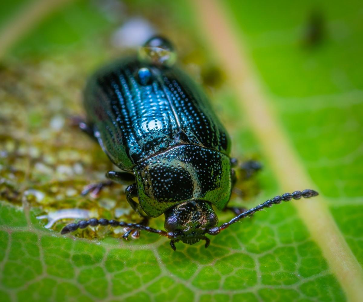 Мучной жук: особенности, вред, борьба, профилактика