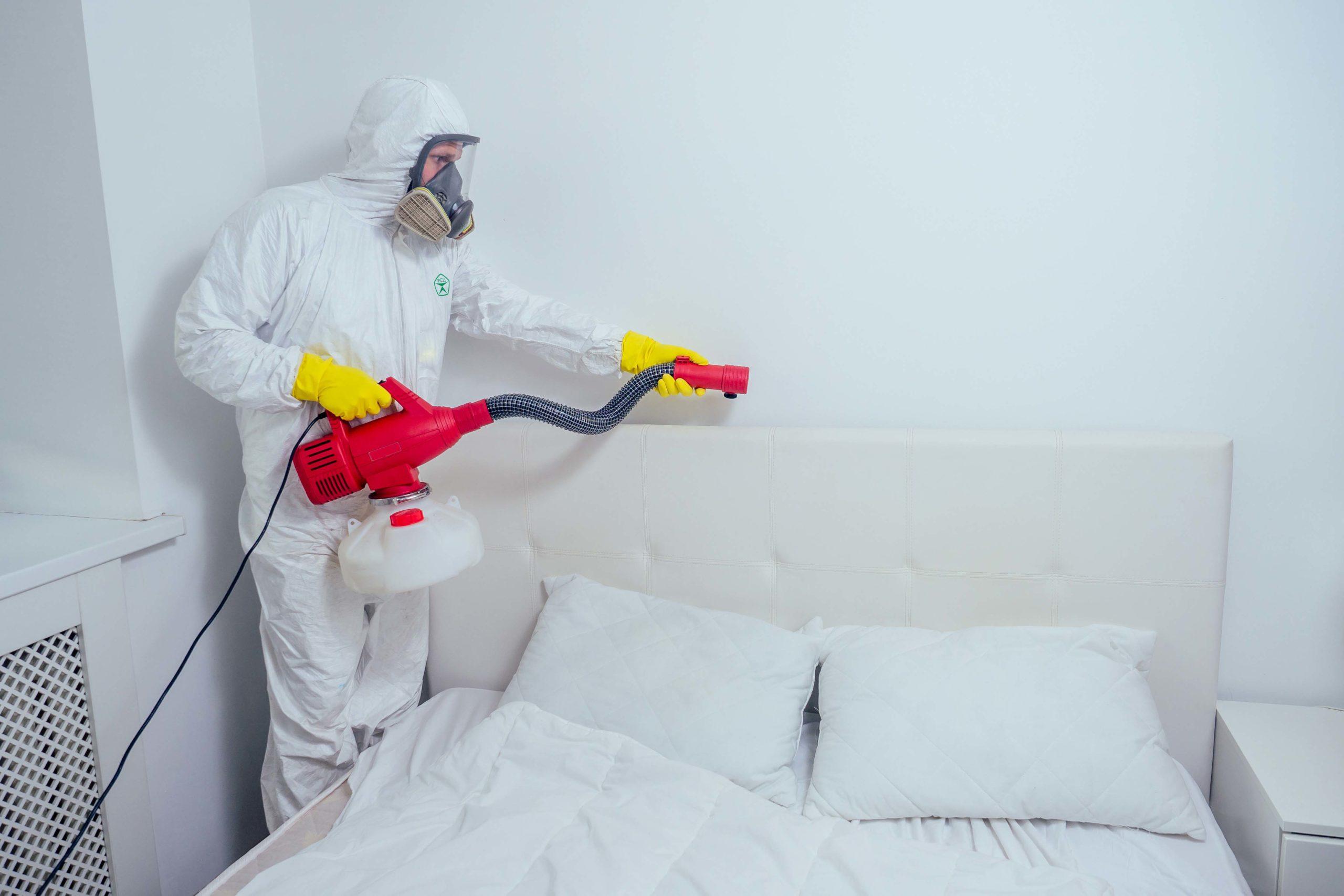 ❿ 10 вариантов избавления от клопов в диване в домашних условиях: как они выглядят и чего боятся