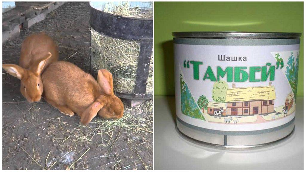 Как обезопасить кроликов от комаров - jurnalagronoma