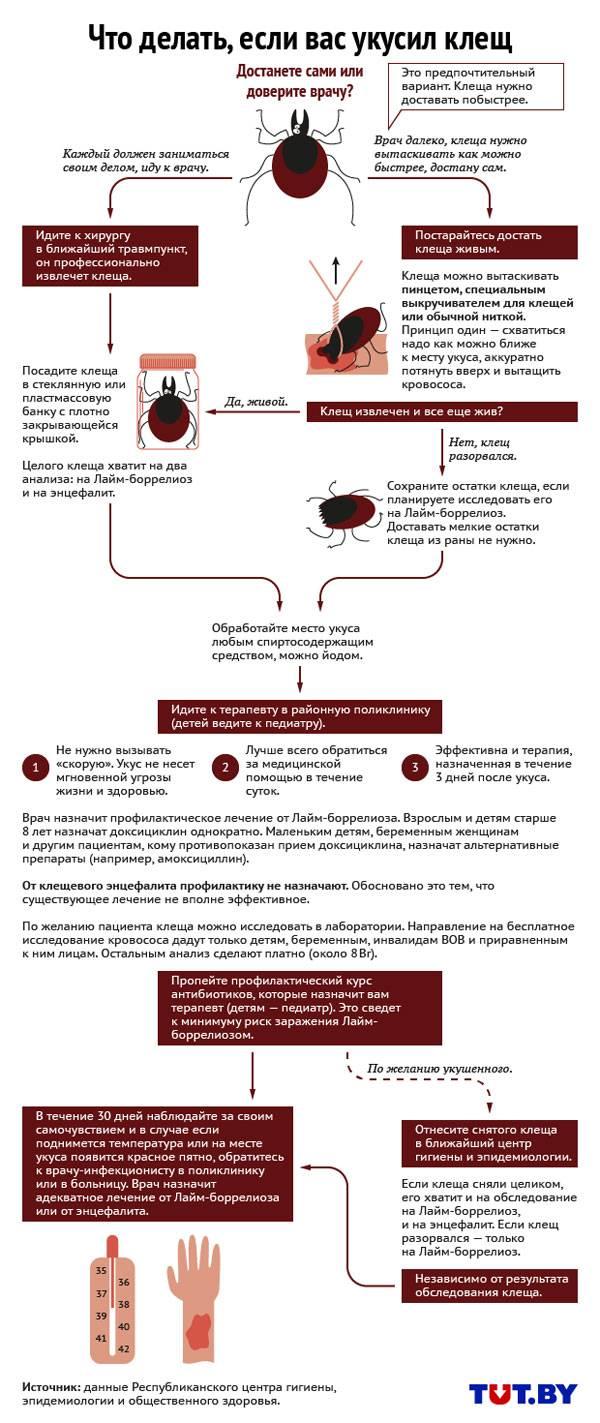 Болезнь лайма – правила успешного лечения