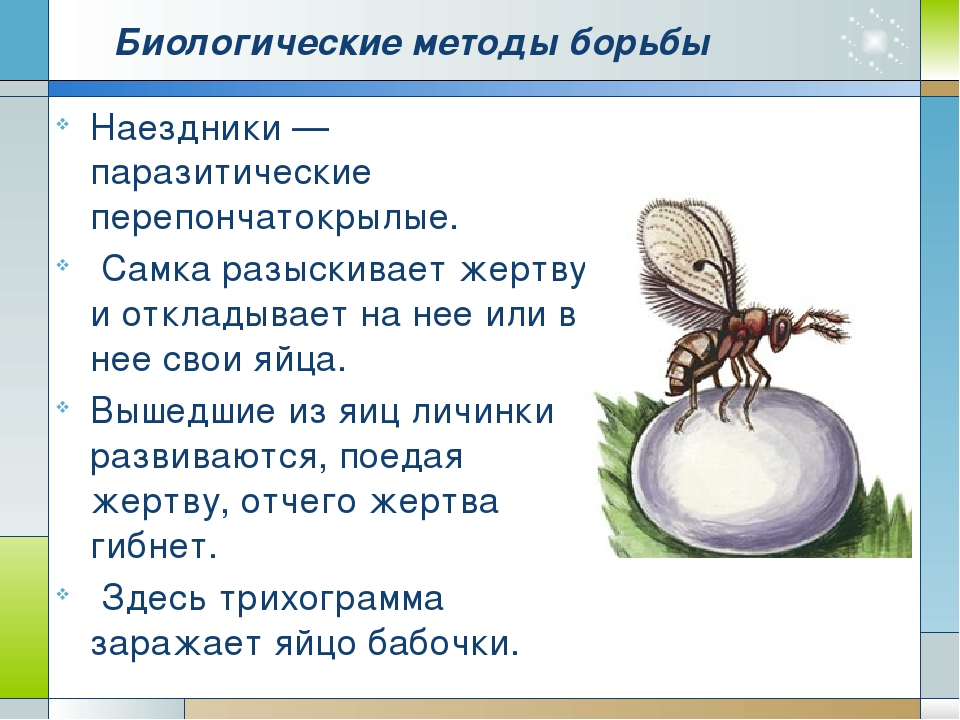 Методы борьбы с бабочницей