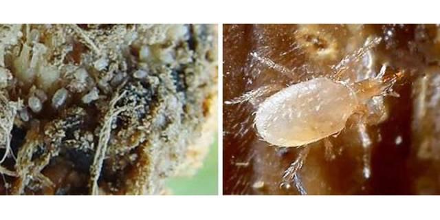 Как бороться с паутинным клещом на различных растениях. паутинный клещ на комнатных растениях: как бороться в домашних условиях?