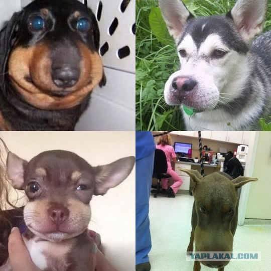 Укусы у собак. что делать, если собаку укусило другое животное? - petstime.ru