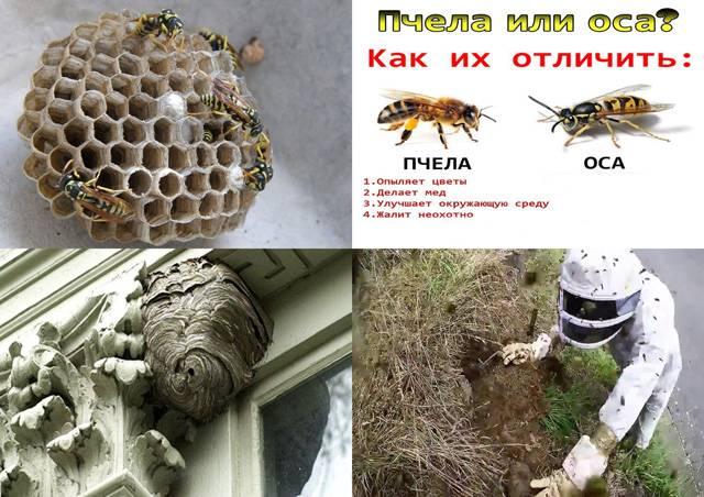 Как избавиться от ос на балконе: химические средства и народные методы
