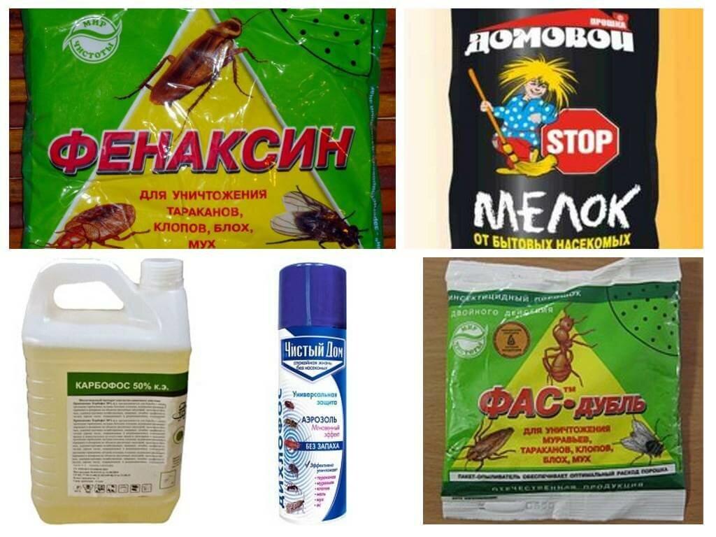 Как избавиться от земляных блох в доме: доступные методы борьбы с кровососами