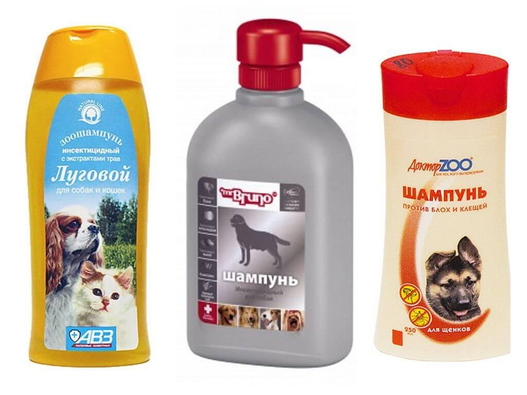 Шампунь от блох для собак: правила использования и безопасности