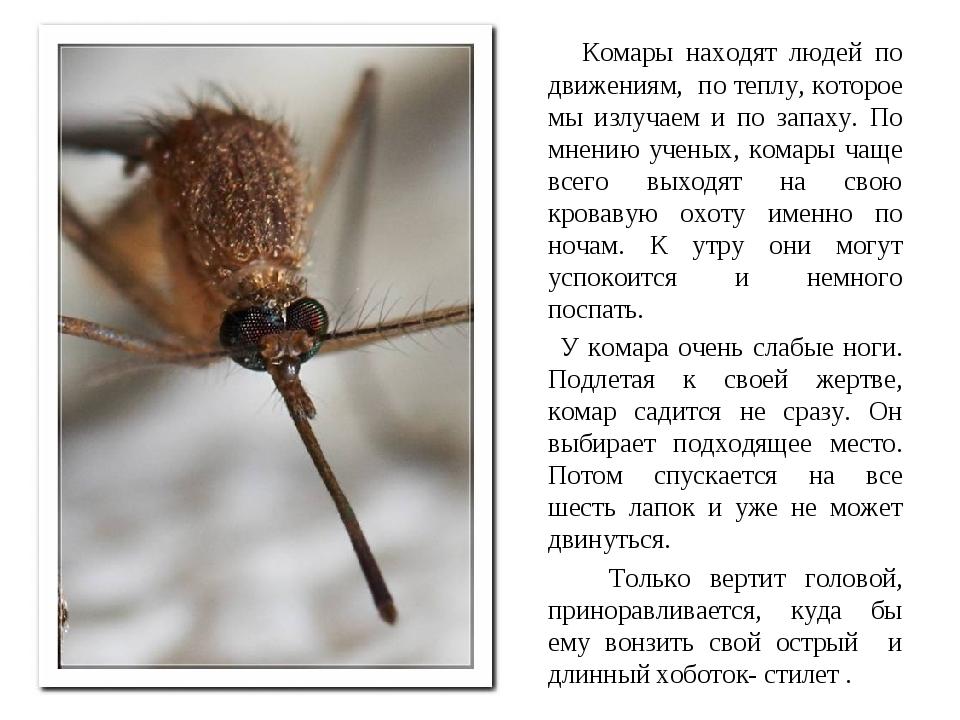 Комары летят на свет или. как видят комары и что их привлекает к человеку