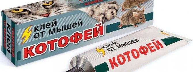 Как сделать клей от мышей своими руками