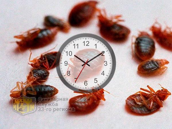 Сколько живут постельные клопы: без еды, без крови, при низкой температуре