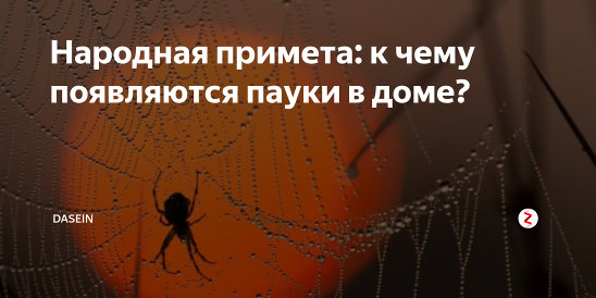 ᐉ приметы про пауков – что обещает нам встреча с восьмилапыми созданиями? - taro1.ru