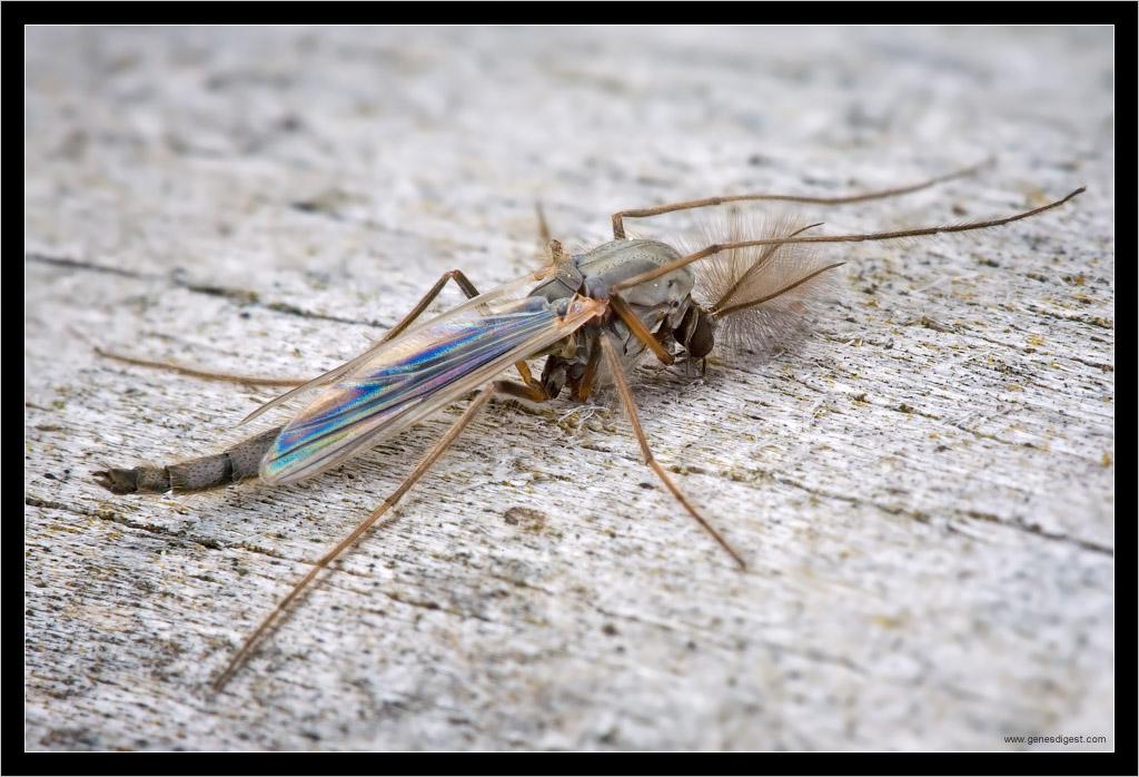 Звуки против комаров