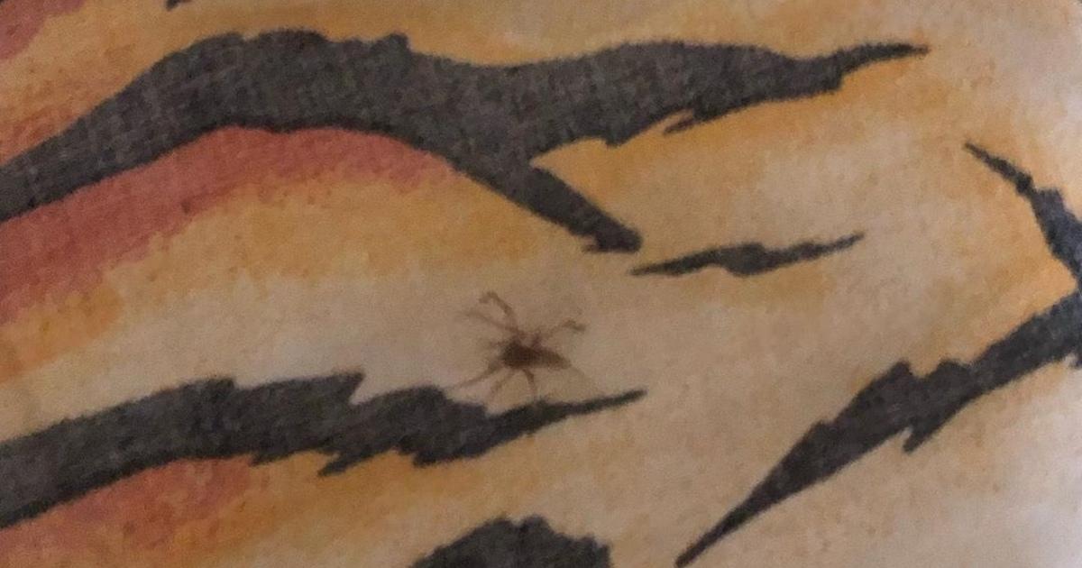 Могут ли укусить домашние пауки