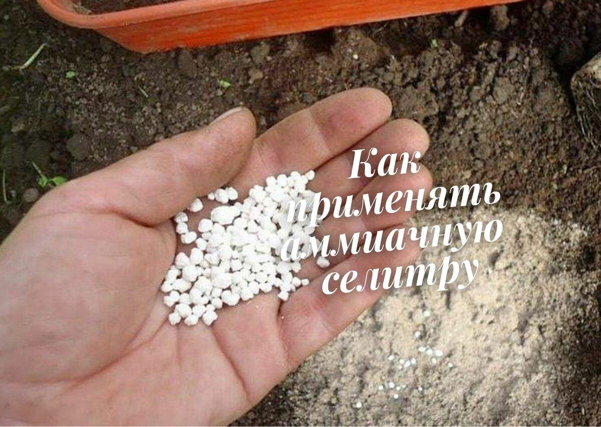 Как избавиться от муравьев на участке: народные рецепты