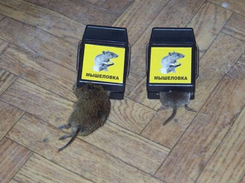 Способы ловли мышей без использования мышеловки 2021