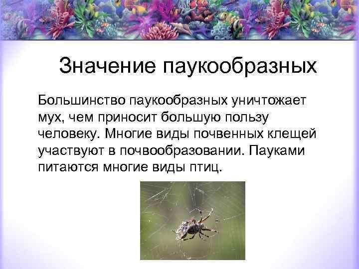 Польза пауков для человека: интересная информация