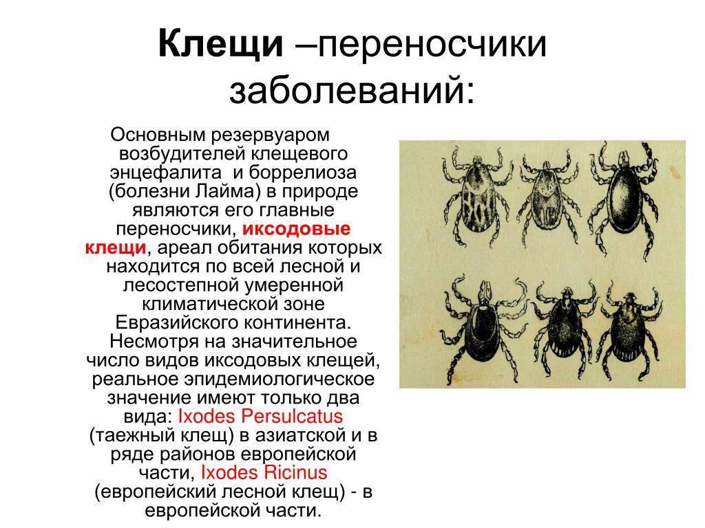 Сырный клещ: польза и вред насекомого, способы борьбы с паразитом и методы профилактики заражения