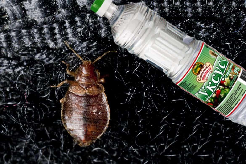 Народные средства от тараканов: как избавиться в домашних условиях