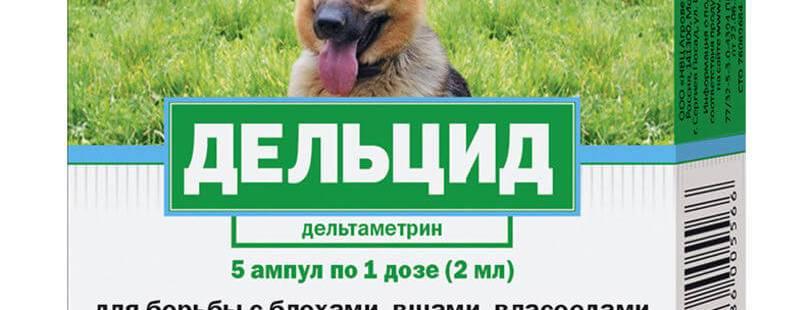 Дельцид (ампулы) для кошек, попугаев | отзывы о применении препаратов для животных от ветеринаров и заводчиков