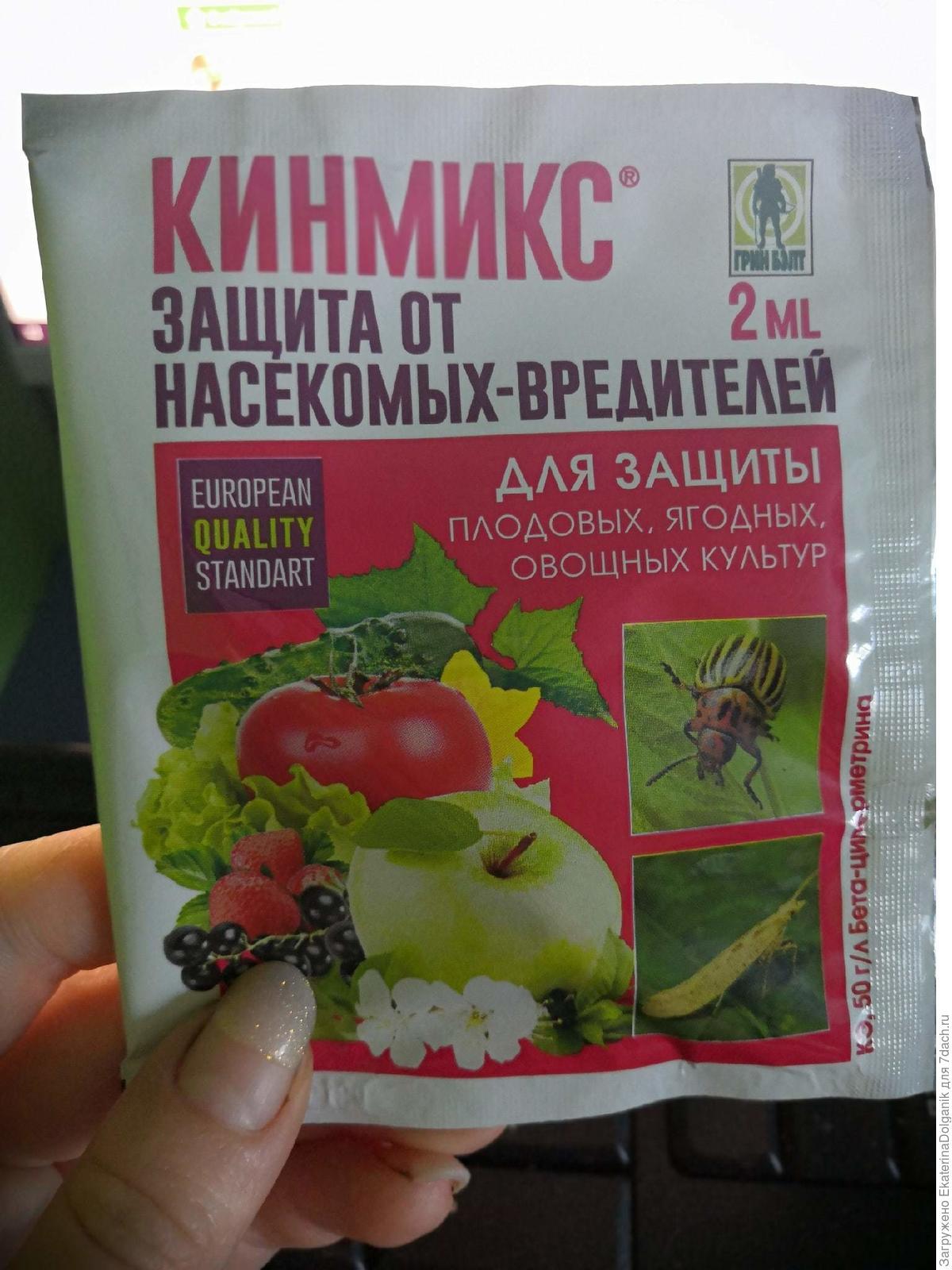 Народное средство от колорадского жука | огородники