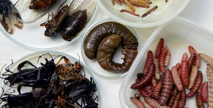 Готовим мадагаскарских тараканов вкусно